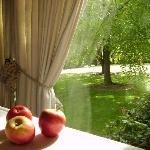 apples in september