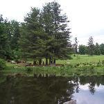 Lake setting