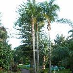 Oberer Garten mit Liegewiese