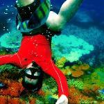 Coral @ Phi Phi