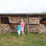 Horse stable