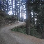 The Road to Kalatop Forest Rest House