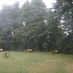 The lawn in Kalato Forest Guest house
