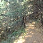 Trekking route-kalatop