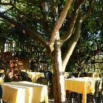 Under the Lemon Trees