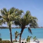 Hey, palm tree blue sky