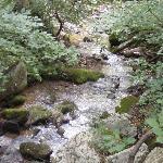 Creek beside our cabin