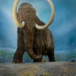 Woolly Mammoth - Featured in the Natural History Gallery of the Royal BC Museum