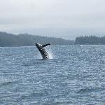 whales near Ucluet