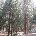 view of our trees in the campground