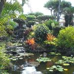 The Koi Pond on the grounds