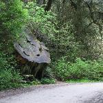 Huge old stump - Howland Hill Road, Crescent City