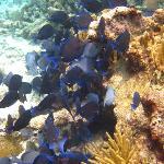 fish on reef