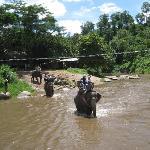 象に乗り川渡り