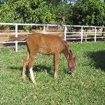 A lucky little foal having a good rest.