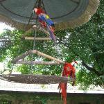 Papageien im Innenhof