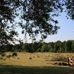 The sheep of Great Wishford
