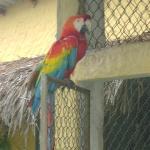 Rain Forrest Birds in Rehab