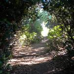 Trail to the river