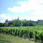 las viñas