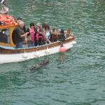 A must see, seals at the harbour