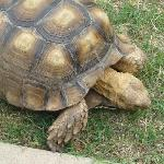 Turtle On The Loose!