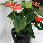 HR Catania-Plants hotel reception