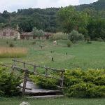 Foto di Villetta di Monterufoli
