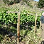 George takes uson a tour of the vineyard