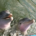 The two dolphins we swam with