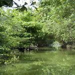 Marapendi wetlands