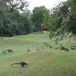 Playacar Golf Club Foto