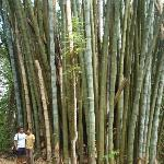 King Size Bamboo