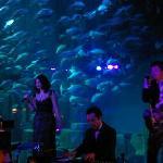 concert Cineaqua Paris - décembre 2009 -