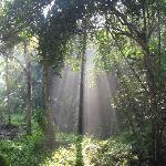 view outside jungle villa at 8am