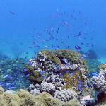 Excellent scuba diving opportunities!