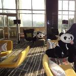 panda in the bar