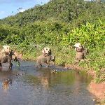 Elephant Adventures trekking