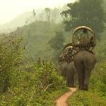 Elephant Adventures trekking in the forest