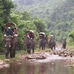 Elephant Adventures trekking along the river