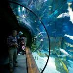 Large UK waters display