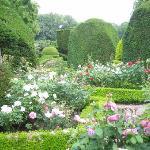 野趣溢れる薔薇