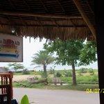 Baobab Restaurant Foto