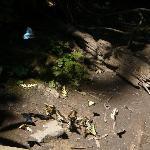 Tons of Butterflies at Indian Creek Falls