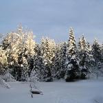 back yard in winter!