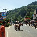 Downtown Haputale - Bandarawela Road