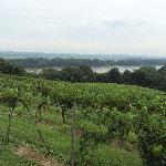 View of Vineyard from Oak Glenn