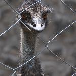 Mr.Emu