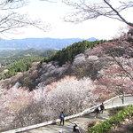 Mt. Yoshinoyama