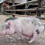 You have a horses ranch next door, and a cute pig :)